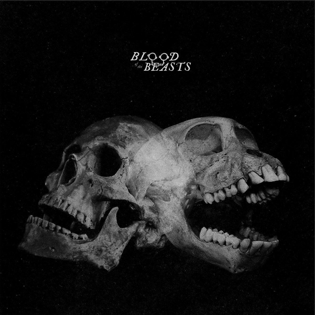 SECT Blood Of The Beasts